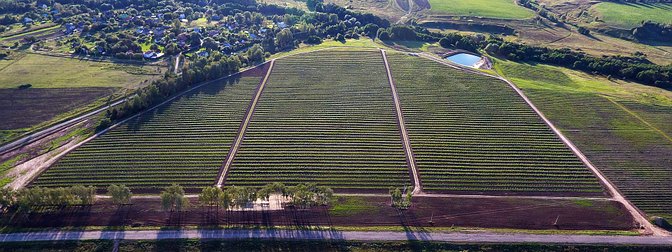 Яблоневый сад и малиновая плантация стали прибыльны или почему предприниматели обращают всё больше внимания на сельское хозяйство